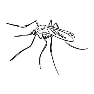 Насекомые комар картинки раскраски (34)