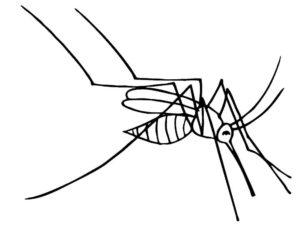 Насекомые комар картинки раскраски (37)