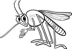 Насекомые комар картинки раскраски (39)