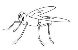 Насекомые комар картинки раскраски (40)