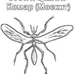 Насекомые комар картинки раскраски (5)