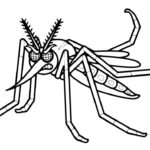 Насекомые комар картинки раскраски (6)