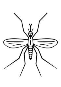 Насекомые комар картинки раскраски (7)