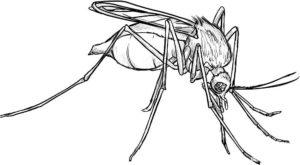 Насекомые комар картинки раскраски (8)