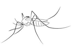 Насекомые комар картинки раскраски (9)