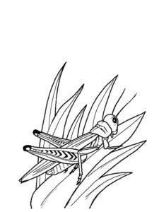 Насекомые кузнечик картинки раскраски (35)