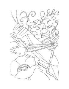 Насекомые кузнечик картинки раскраски (36)