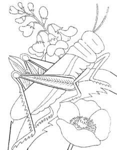 Насекомые кузнечик картинки раскраски (47)