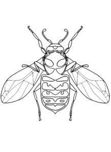 Насекомые муха картинки раскраски (1)