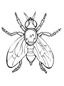 Насекомые муха картинки раскраски (10)