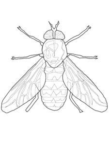 Насекомые муха картинки раскраски (11)