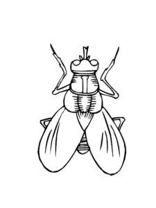 Насекомые муха картинки раскраски (12)