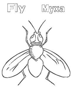 Насекомые муха картинки раскраски (15)