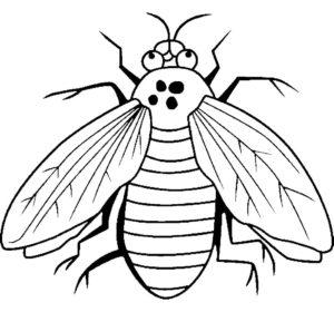 Насекомые муха картинки раскраски (20)