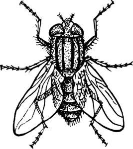 Насекомые муха картинки раскраски (24)
