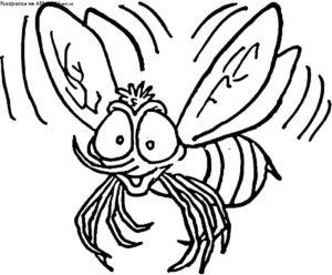 Насекомые муха картинки раскраски (27)