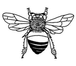 Насекомые муха картинки раскраски (29)