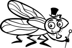 Насекомые муха картинки раскраски (3)