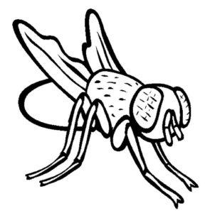 Насекомые муха картинки раскраски (37)