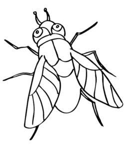 Насекомые муха картинки раскраски (38)