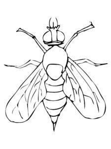 Насекомые муха картинки раскраски (4)