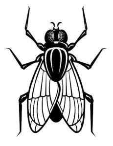 Насекомые муха картинки раскраски (40)