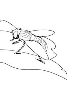 Насекомые муха картинки раскраски (41)