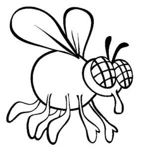 Насекомые муха картинки раскраски (43)