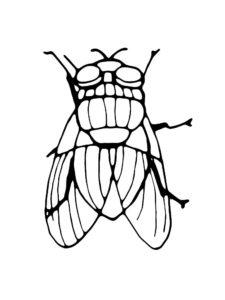 Насекомые муха картинки раскраски (44)
