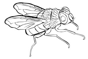 Насекомые муха картинки раскраски (45)