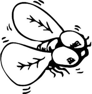 Насекомые муха картинки раскраски (48)