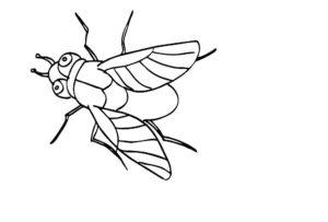 Насекомые муха картинки раскраски (49)