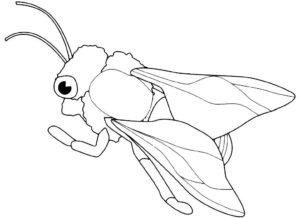 Насекомые муха картинки раскраски (53)