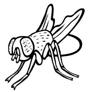 Насекомые муха картинки раскраски (55)