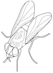 Насекомые муха картинки раскраски (56)