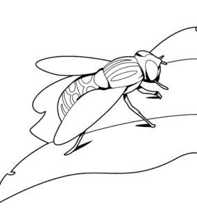 Насекомые муха картинки раскраски (62)