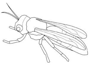 Насекомые муха картинки раскраски (7)