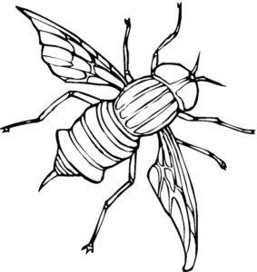 Насекомые муха картинки раскраски (8)