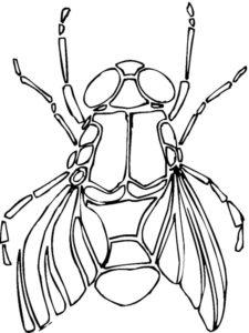 Насекомые муха картинки раскраски (9)