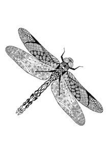 Насекомые стрекоза картинки раскраски (17)