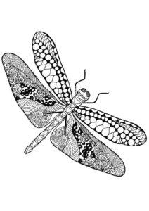 Насекомые стрекоза картинки раскраски (18)