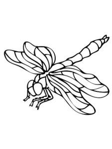 Насекомые стрекоза картинки раскраски (21)