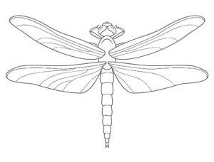 Насекомые стрекоза картинки раскраски (22)