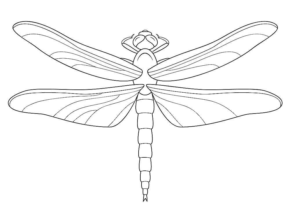Картинки стрекозы для срисовки