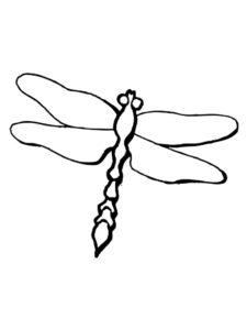 Насекомые стрекоза картинки раскраски (23)