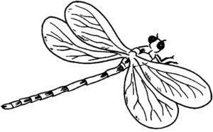 Насекомые стрекоза картинки раскраски (28)