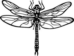 Насекомые стрекоза картинки раскраски (37)