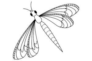 Насекомые стрекоза картинки раскраски (38)