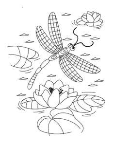 Насекомые стрекоза картинки раскраски (48)