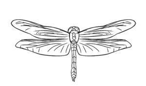 Насекомые стрекоза картинки раскраски (49)